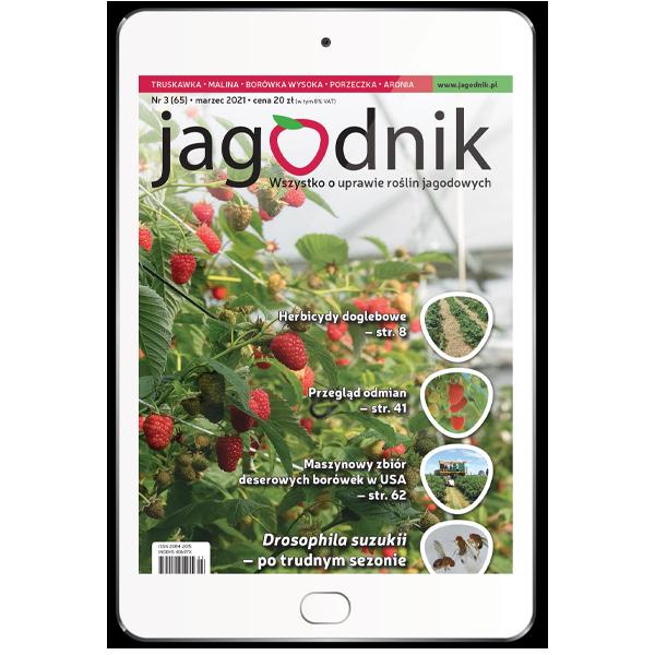 Pojedynczy numer Jagodnika – wydanie cyfrowe w formacie PDF